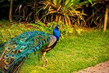 Catussaba Resort - Fauna 02